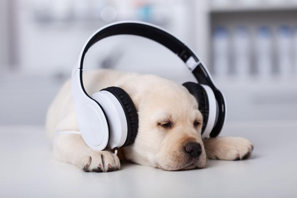 Spotify Will Now Create a Music Playlist For Your Pet